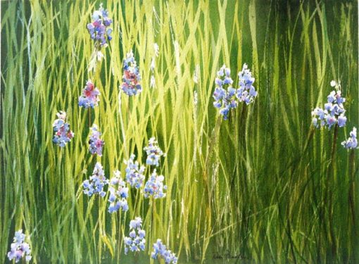 Lupine in the Grass watercolor by Rose Bradley