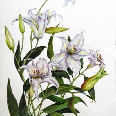 White Lilies Watercolor by Rose Bradley